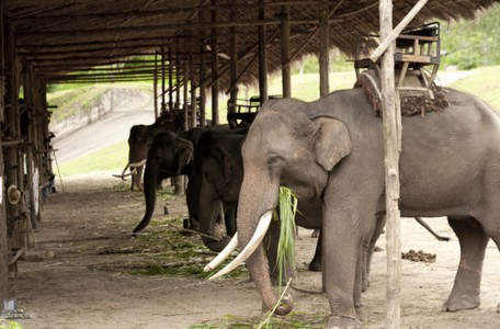 Elefanten Safari Park