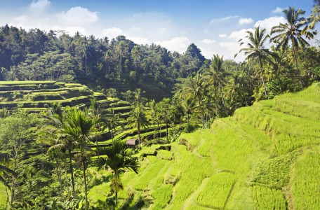 Balis Reisterrassen