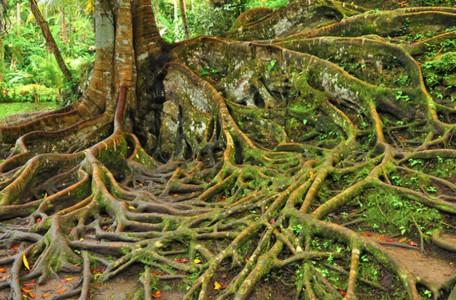 Urwald auf Bali